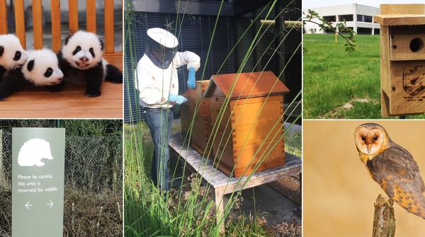 强生救助濒危物种的5项特殊动物保护工程