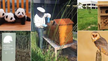 強生救助瀕危物種的5項特殊動物保護工程